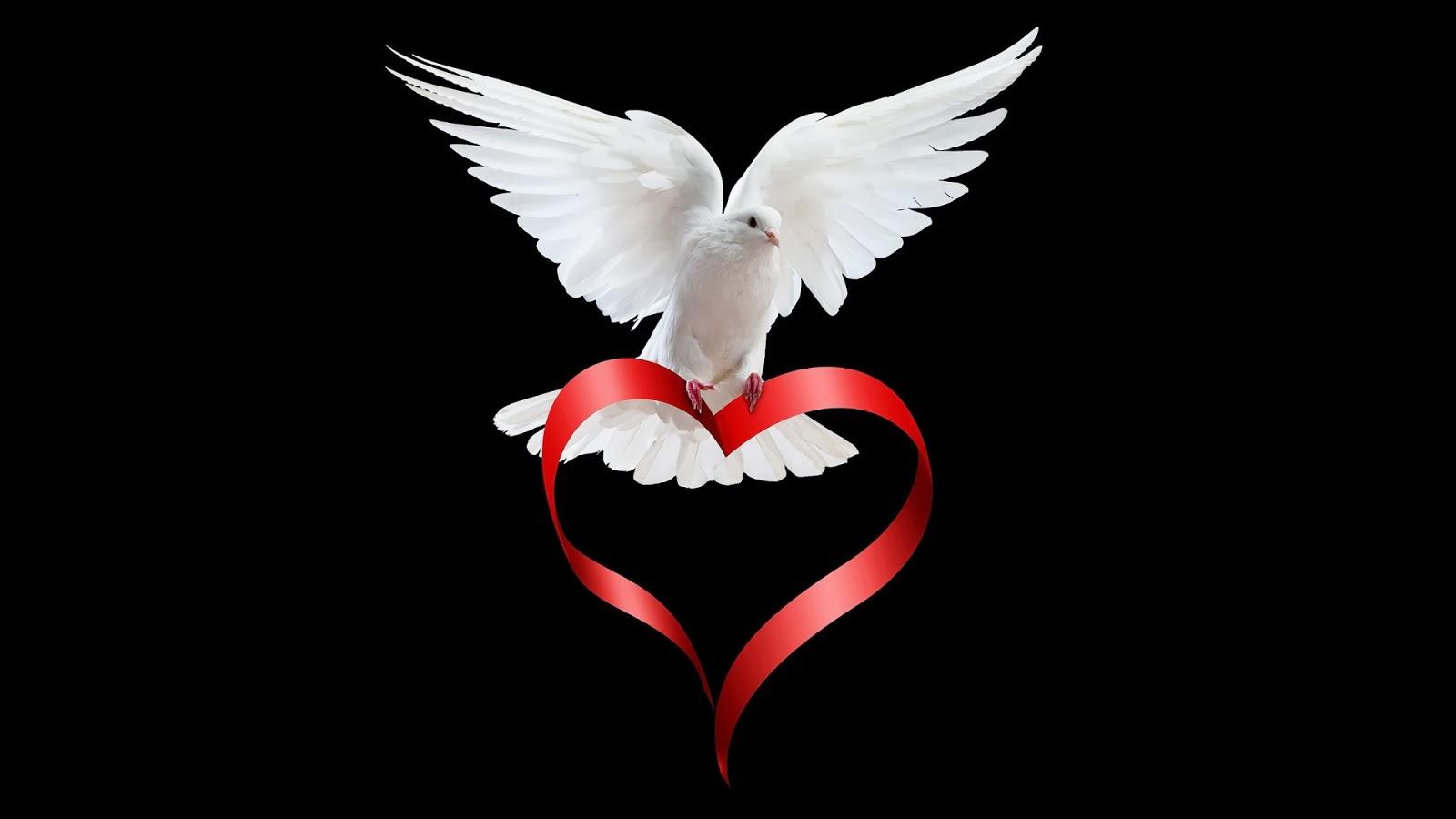 ĐTC mời gọi mọi người xây dựng và sống hòa bình mỗi ngày